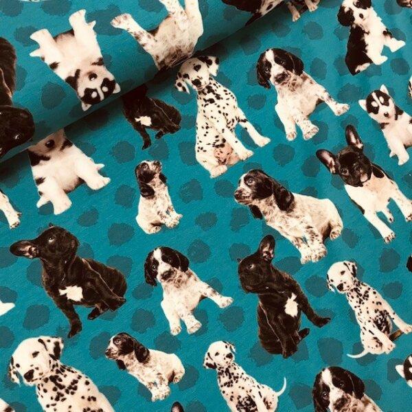 Hunde Jersey petrol