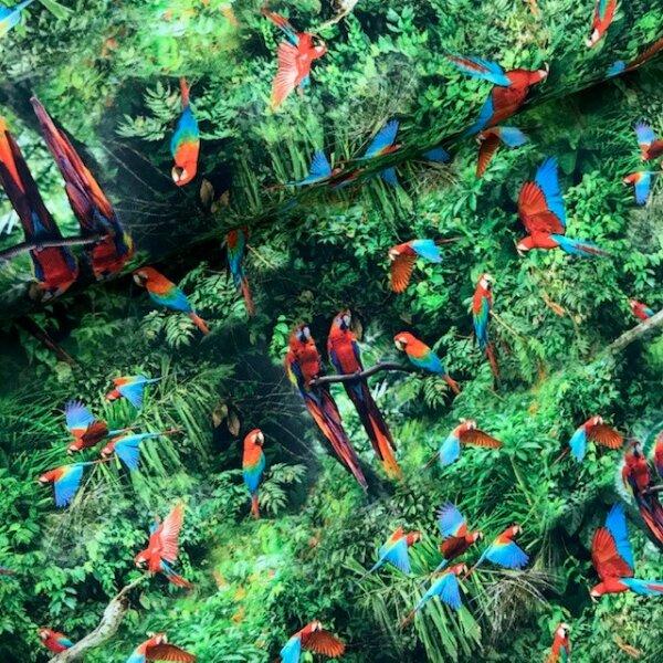 Papageien im Dschungel Jersey grün